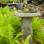 Ferns with Stone Birdbath